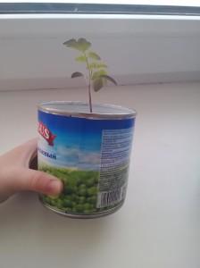 Емкость для выращивания рассады