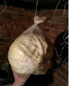 как мы храним капусту зимой